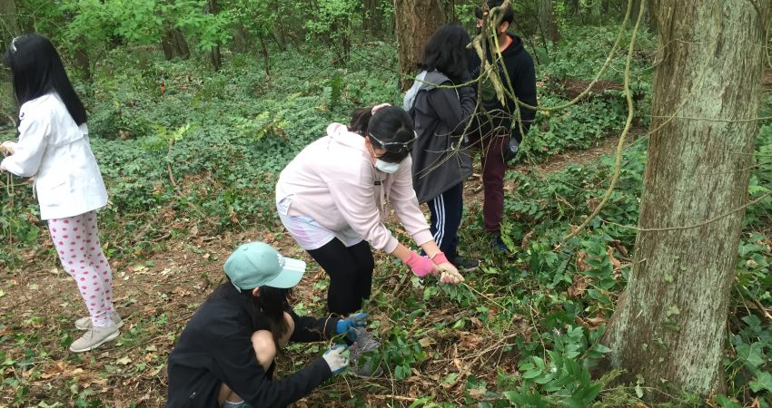 Global Action – pulling invasive plants
